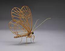 Glasswing butterfly (Hypoleria oto)
