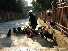 Istanbul,definitely a cat city
