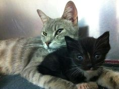 Foster home needed for felines abused by Philadelphia restaurant owner