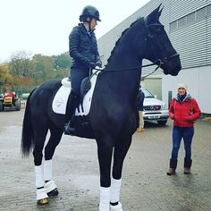 Is it me, or are dressage horses getting bigger? Vogue & Charlotte Dujardin