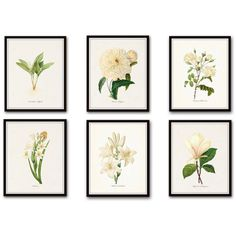 White Botanical Print Set No. 4, Botanical Print, Giclee, Art Print,... (185 BRL) ❤ liked on Polyvore featuring home, home decor, wall art, white wall art, vintage home decor, floral wall art, vintage home accessories and white home accessories