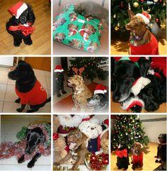 Celebrate Christmas With Your Pooch  www.pamperedpoochpartiesandbarkerytreats.com.au