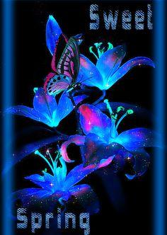 Purple Flowers Wallpaper, Butterfly Wallpaper, Purple Roses, Butterfly Images, Flower Images, Flower Art, Beautiful Gif, Beautiful Flowers, Flower Screensaver