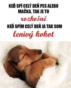 What a wonderful dream Wonderful Dream, I Have A Dream, Beautiful Friend, Jokes Quotes, Dog Quotes, Dog Art, Dog Lovers, Haha, Comedy