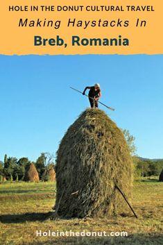 Cel mai bun site de dating agricultor)