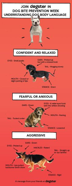 Infographic – Canine body language. Know the signs of when a dog is and is not about to attack!