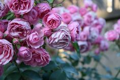 Blooming in Jestädt, Germany. Image by Travel Maria, via Flickr.