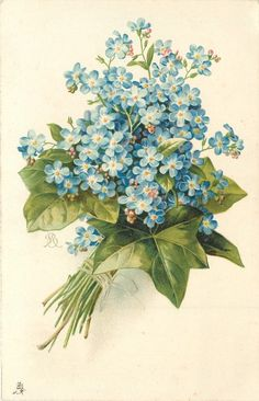 bunch of blue forget-me-nots tied with string, ivy leaves around, stems left