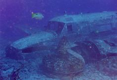 9 Amazing Airplane Wrecks to Dive - Scuba Diver Life