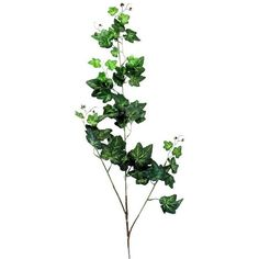 Stuttgart Ivy Spray in Green (19 MYR) ❤ liked on Polyvore featuring home, home decor, floral decor, flowers, artificial flower stems, green flower bouquets, artificial flower bouquets, silk flower bouquets and artificial bouquets