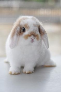 Hello my new friend - modernbathroom - Pet bunny - # rabbit # animals # rabbit . - Hello my new friend – modernbathroom – Pet bunny – # animals knitting - Cute Bunny Pictures, Baby Animals Pictures, Cute Little Animals, Cute Funny Animals, Cute Pets, Lop Eared Bunny, Rabbit Breeds, Cute Baby Bunnies, Mini Lop Bunnies
