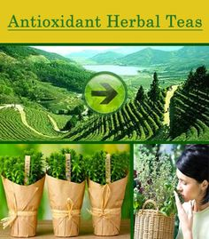 36 Best Ayurveda & Herbs images in 2015 | Natural medicine