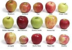 Check out the ultimate guide to shopping for and cooking with different types of apples, including Granny Smith, Red Delicious, and more. Cooking App, Just Cooking, Cooking Classes, Cooking Pork, Cooking Salmon, Cooking Turkey, Cooking Light, Granny Smith, Hibiscus
