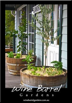 wine barrel planters