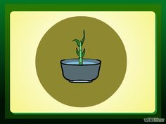 Propagate Lucky Bamboo Step 5.jpg