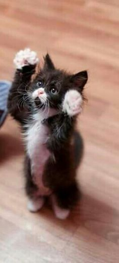 Here are 20 adorable kittens to help you master the day - Katzen Bilder - Gatos Pretty Cats, Beautiful Cats, Animals Beautiful, Beautiful Places, Cute Baby Animals, Animals And Pets, Funny Animals, Animals Images, Zoo Animals
