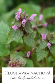 Korn, Herbs, Health, Garden, Nature, Garten, Naturaleza, Health Care, Lawn And Garden