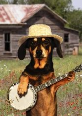 Fantastic musical greeting cards featuring the colorful and hilarious singing of Lucy Lou and her friends! Best Friend Birthday Cards, Singing Happy Birthday, Birthday Wishes, Black And Tan Dachshund, Dachshund Love, Best Dog Breeds, Best Dogs, Musical Cards, Little Dogs