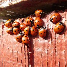 Ladybird party :)