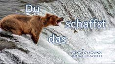 Du schaffst das schon - Wilhelm Bröslmeyr - (Klubbb3) - Panflöte  - Pan ... Brown Bear, Music, Animals, Pan Flute, Musica, Musik, Animaux, Animal, Muziek
