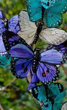 Resultado de imagem para borboletas azuis
