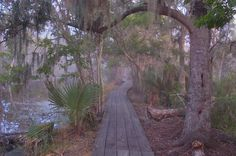 Jean Lafitte Barataria National Park. My dad used to take me fishing here when I was a little girl.