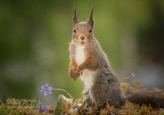 look for sure by geertweggen #animals #animal #pet #pets #animales #animallovers #photooftheday #amazing #picoftheday