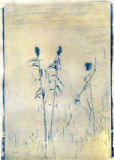Cianotipia su carta da tè.  #cianotipia #cyanotype #sunprint #alternativephotography