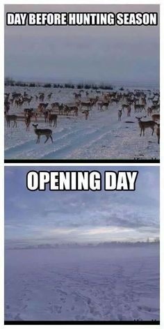 Opening day. This is no shit. I think a memo goes out between the deer herds.