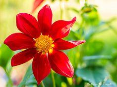 20 tolle Sommerblumen für Blumenkästen, die Sie selbst säen können