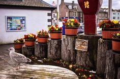 Stornoway, Scotland #Stornoway #IsleOfLewis #Hebrides #OuterHebrides #ScottishIsles #Island #Scotland #ScotSpirit #Scotland #UKTravel #ScotlandTravel #Europe #EuropeanTravel #Roadtrip #Travel #LoveTravel #TravelBlogger #TravelTips #TravelGuide #TravelBlog #Adventure #EuropeanRoadtrip #TravelItinerary #TravelItineraries #TopTravelTips #TravelPhotography #Photography
