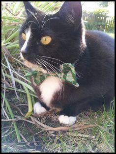 Christmas Tree Bow Tie Cat Collar
