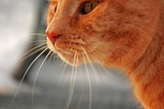 Nisse the Hunter  Foto: Karin Engman