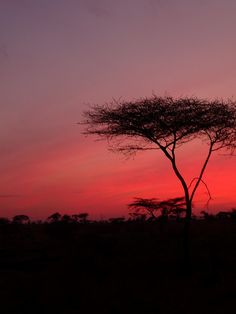 Serengeti, Tanzania Africa