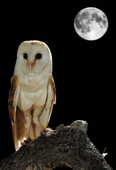 Slate Barn Owl undr the Moon by RockinArt58 on Etsy | CHOUETTES ...