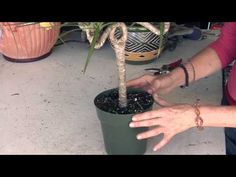 How to repot a Peace Lily YouTube Houseplants Pinterest