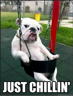english bulldog memes 86 best bulldog memes images dog cat english bulldogs 5775