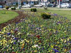 Amenajare parcuri, eco-horticultura servicii Plants, Plant, Planets