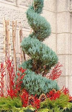Tree planters, Christmas home and Planters on Pinterest