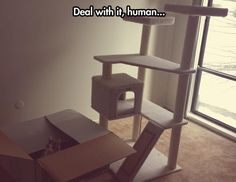 Deal with it, human...