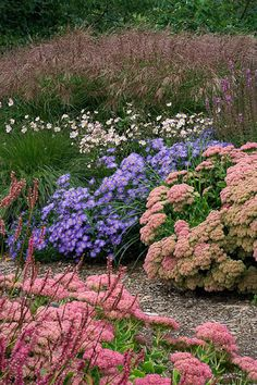 sedum, asters, grasses in background...