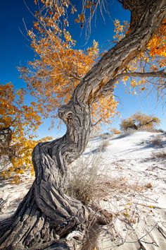 White Sands National Monument by bugeyed G, via 500px; Alamogordo, New Mexico