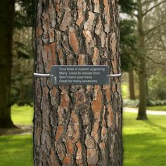 11 best memorial images memory tree memorial ideas memorial markers