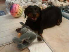 Lady dog with her Mickey Mouse