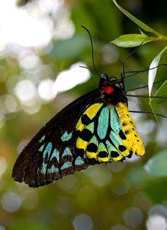 Butterfly | Flickr - Photo Sharing! Butterfly World Coconut Creek, FL
