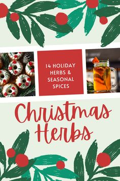 Here are 14 of the best holiday herbs and seasonal spices to enjoy at Christmas time this year! #christmas #herbal #herbs #plants Natural Christmas, Holiday Fun, Christmas Time, Holiday Crafts, Fun Crafts, Holiday Decor, Organic Gardening Tips, Christmas Decorations, Christmas Ornaments