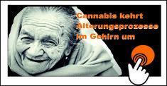 Cannabis - Jungbrunnen für das Gehirn!>>>Cannabis kann diese Alterungsprozesse im Gehirn umkehren. Tier, Cannabis, Movies, Movie Posters, Fountain Of Youth, Brain, Medicinal Plants, Products, Guys
