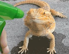 video:   How to Water Your Dragon