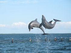 Do Dolphins Grieve? | The Definitive Funeral Planning and ...