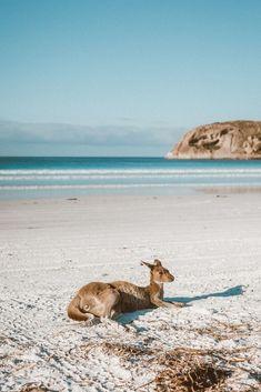 Australia Trip, Australia Beach, Western Australia, Water Aesthetic, Beach Aesthetic, Grand National, National Parks, Vision Board Images, Byron Bay Beach